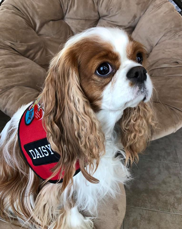 Image of: Milton sharing Smiles And Joy With Daisy Has Been One The Most Rewarding Things Have Ever Done And As Much Joy As Daisy Brings To Others Get Back Even Travel Leisure Does The Cavalier King Charles Spaniel Have What It Takes To Be